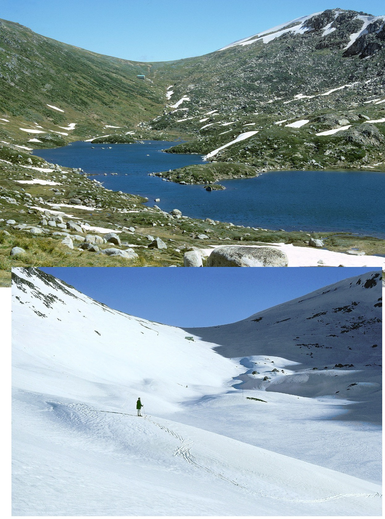 albina w compare  snow.jpg