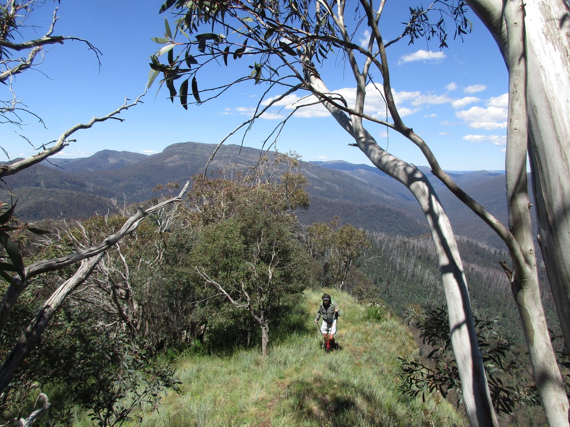 Eagle Peak  hike 1.1.jpg