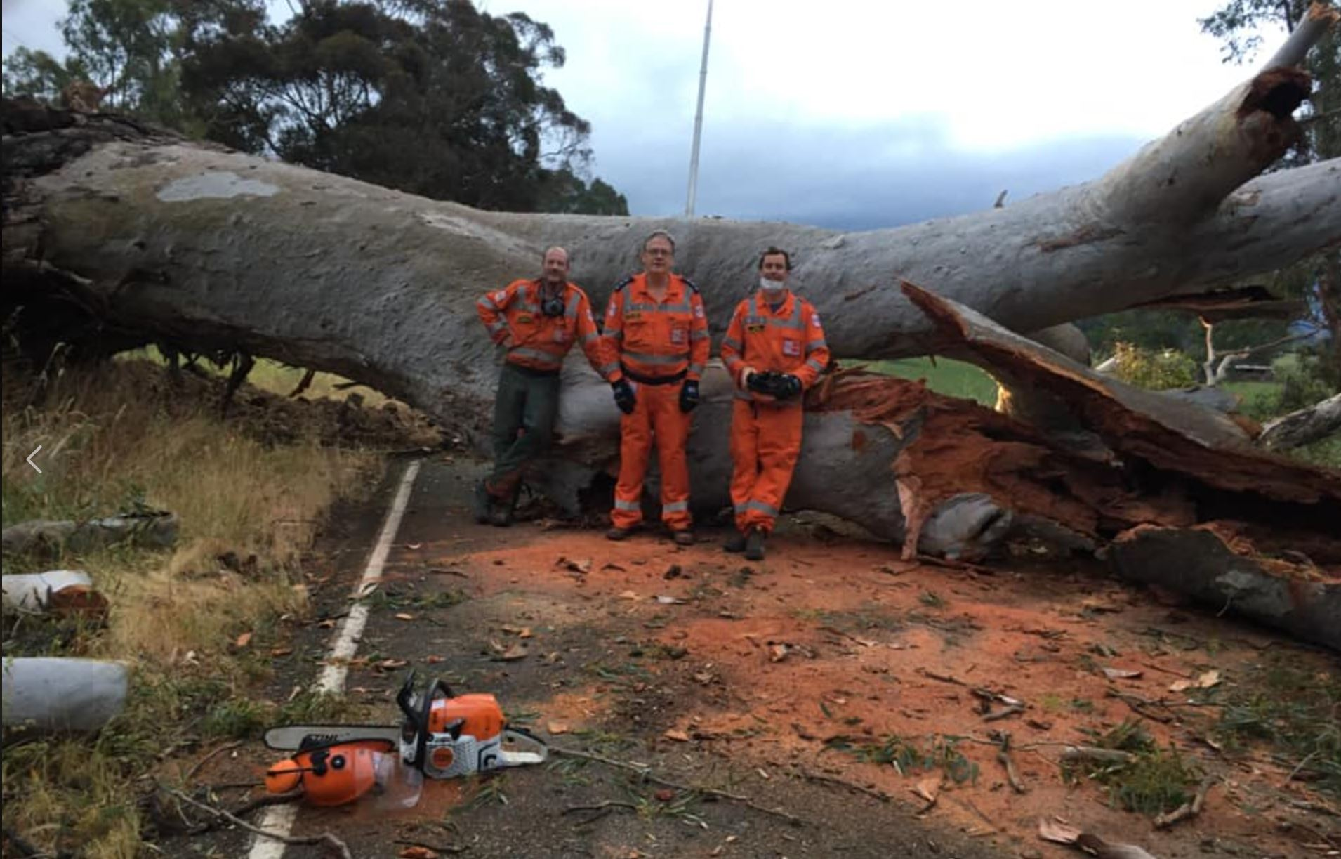 Eildon tree down 20201123.JPG