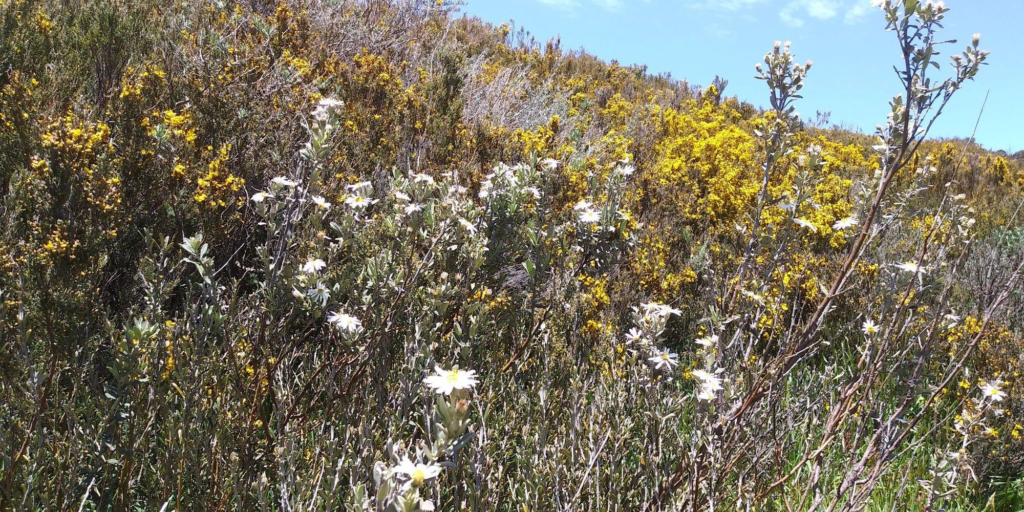 hillside flowers.jpg