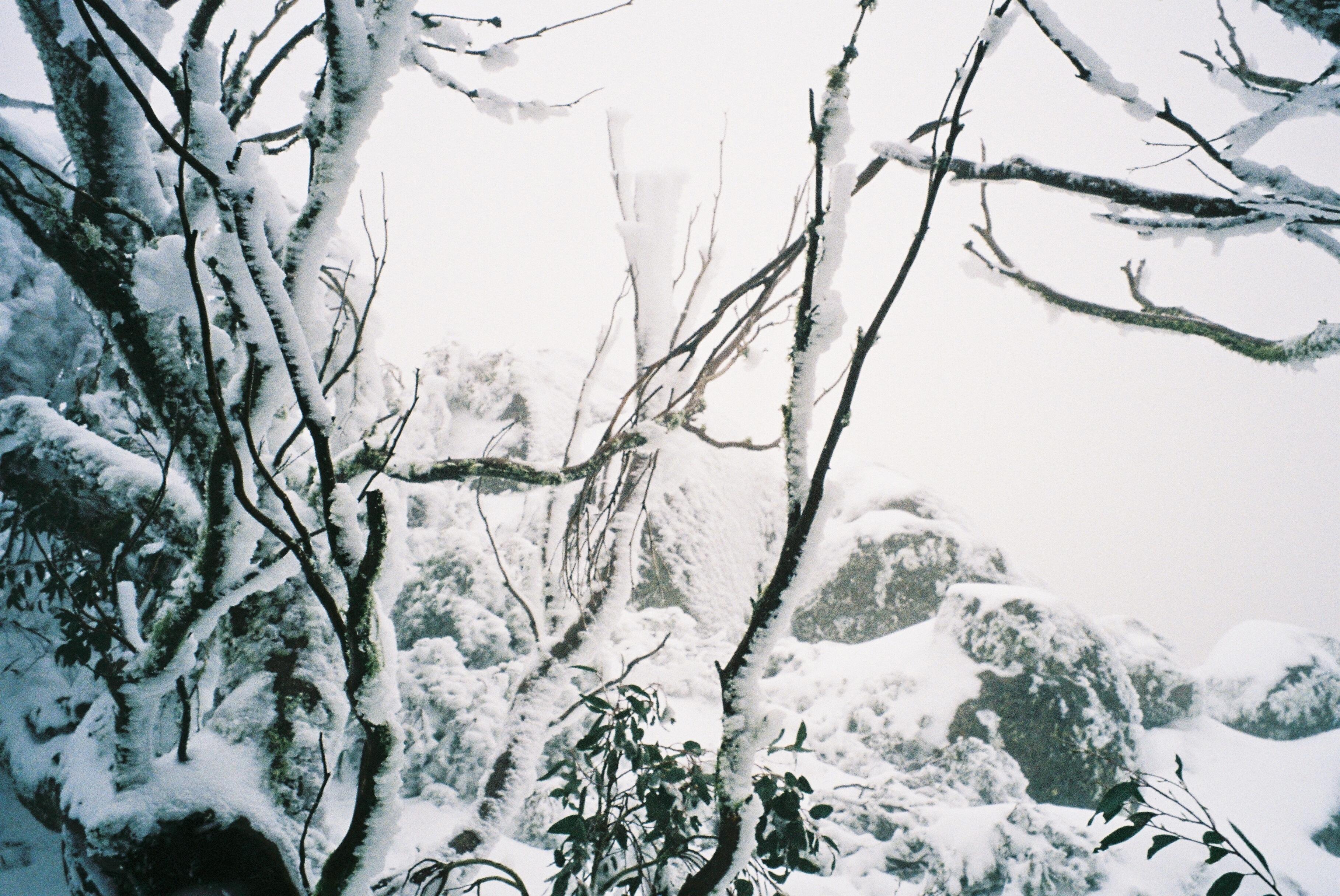 ice near the  summit  of Mt. Torbreck 1.1.jpg