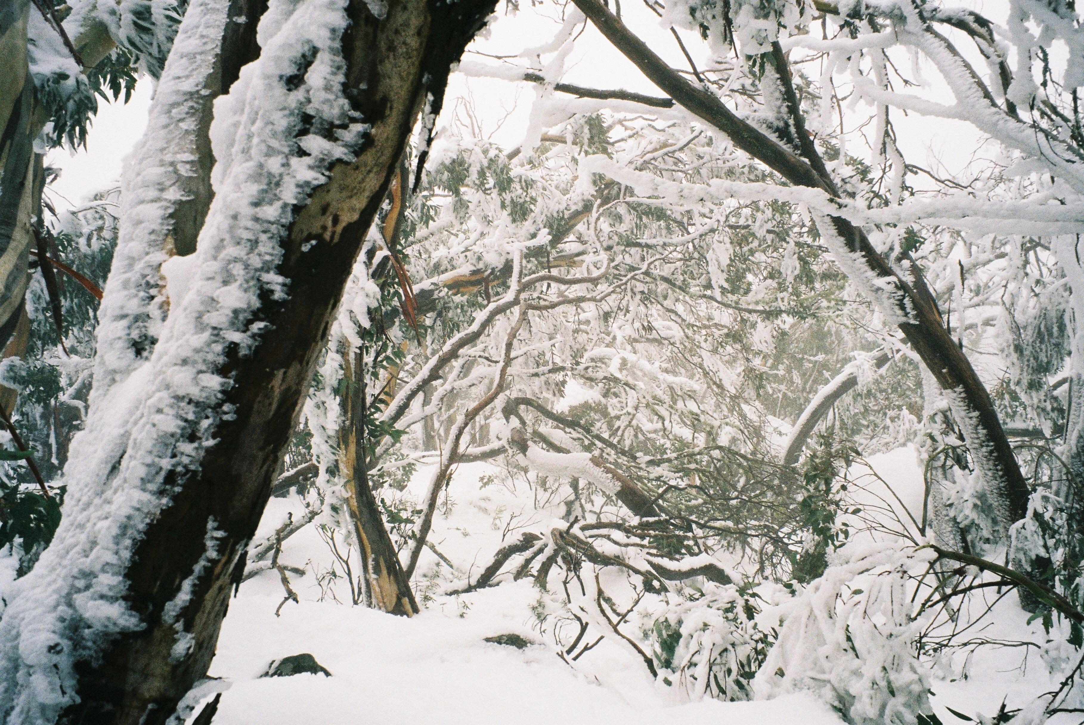 ice near the  summit  of Mt. Torbreck 1.3.jpg