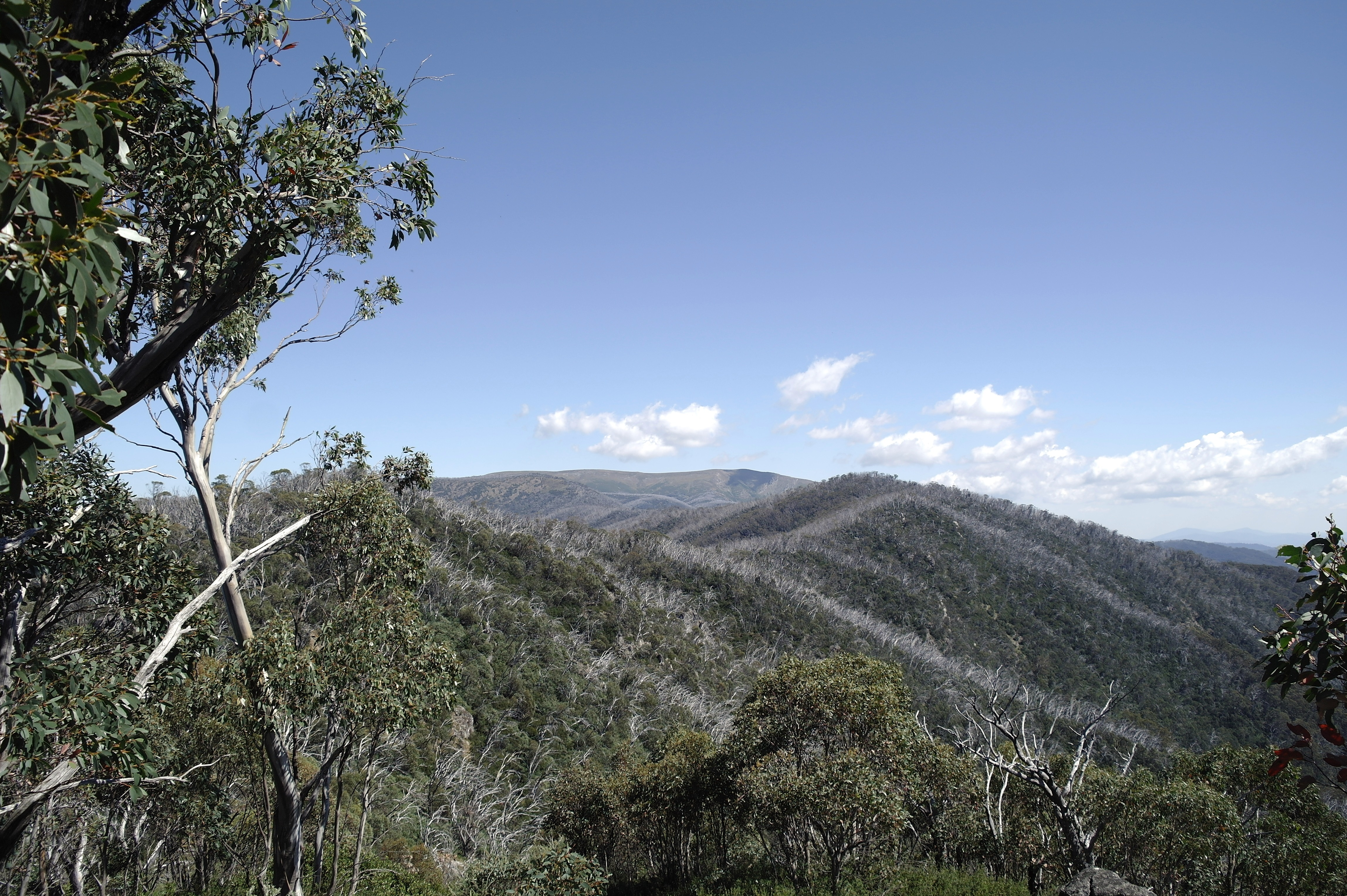 Looking  back  a  Mt. Bogong  from Long Spur.12.3.18.JPG