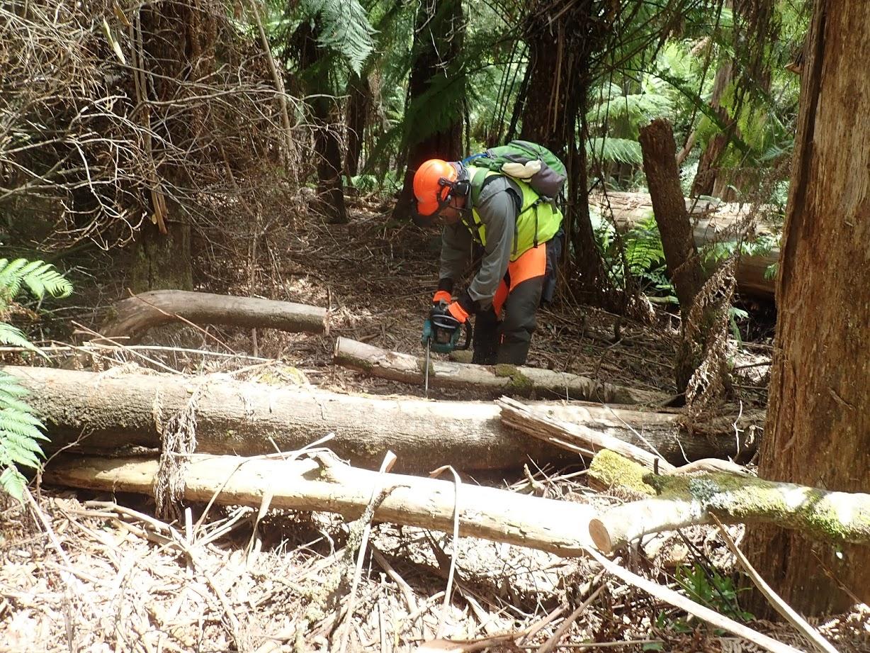 Mr.Tee  using a chain  saw.jpg