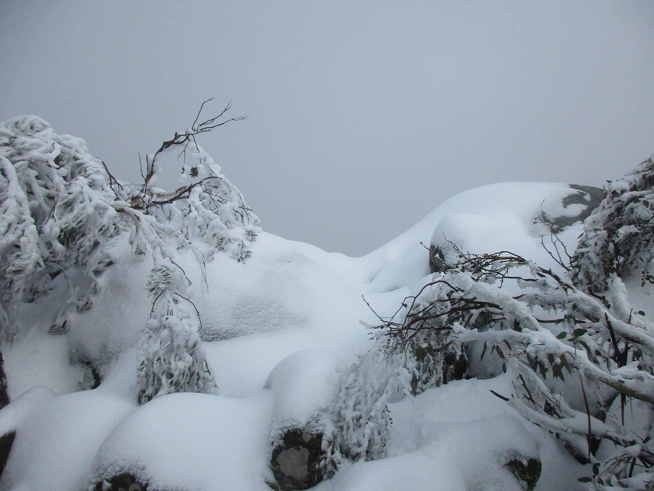 Mt  Torbreck  trek  27.7.16  pic.1.16.a.jpg