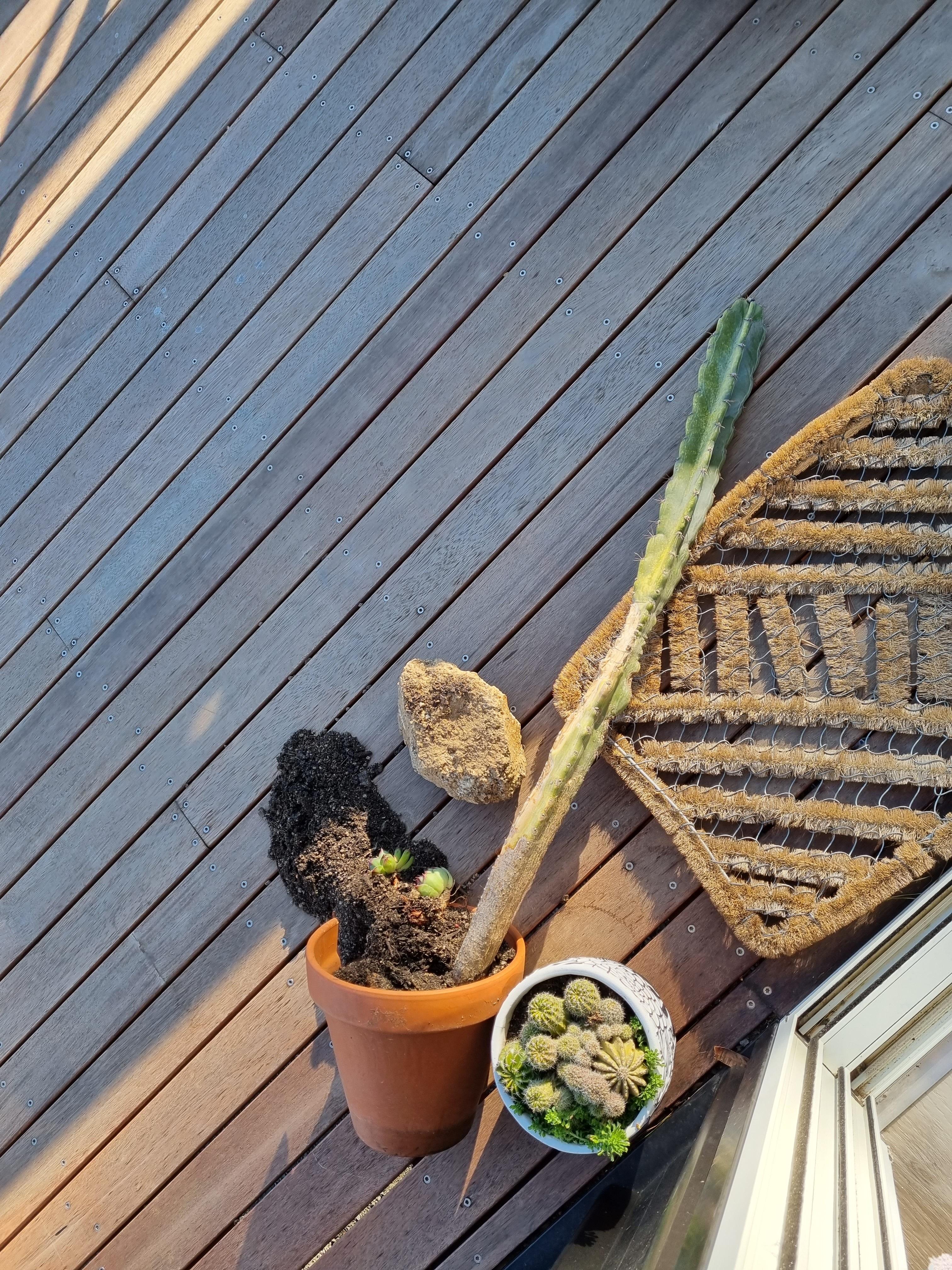 My cactus is cactus.jpg