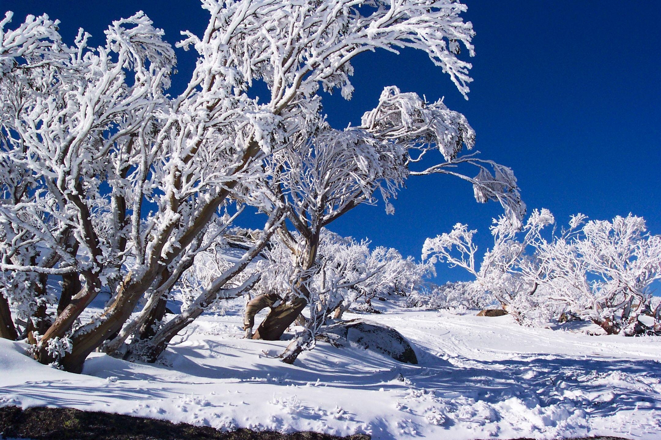 skiing _2264.jpg