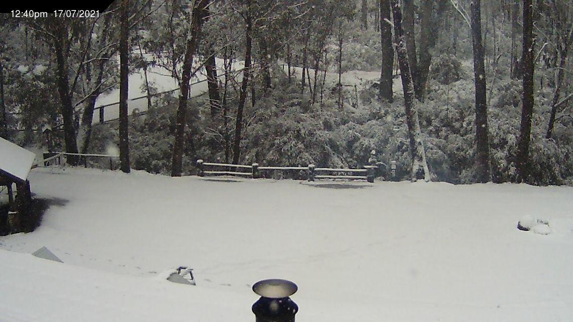 TBJ  Mt. Stirling  1247  July  17th 2021. Snowing ..jpg
